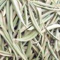 Сушеный лист оливы 50 гр - Eldar