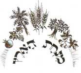 Minhat HaArets - органическая мука